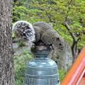 写真: 鶴ケ岡八幡宮