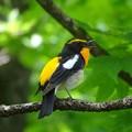 Photos: 福島県鳥