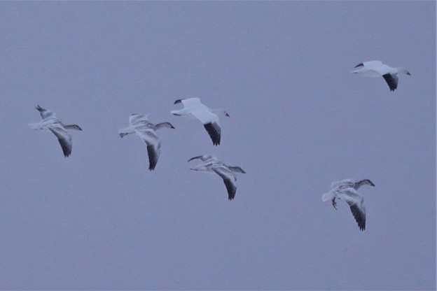 Photos: 若鳥も・・・