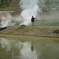 Photos: 野焼き