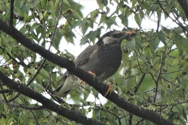 餌を運ぶ 親鳥