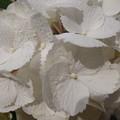Photos: 綺麗な白をすこしズ-ムで
