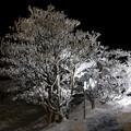 Photos: EOS_8000D_19-01-01_0007