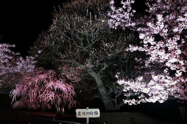 EOS_8000D_19-03-09_0025