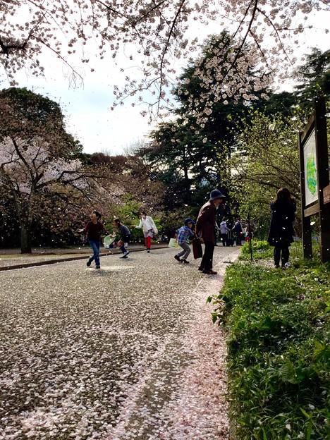2016年 THE 桜吹雪