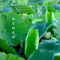 Photos: かくれんぼ