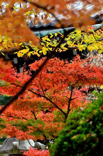 Photos: 2015_1107_093601_真如堂
