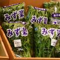 Photos: 2018_0204_135231 水菜
