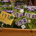 Photos: 2018_0204_135231 -01 壬生菜