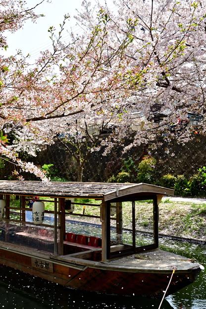 2018_0401_131049 桜吹雪