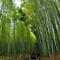 2018_0519_145136 竹林の小径