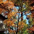 Photos: 2018_1123_114150 京・西山・善峯寺