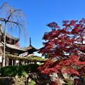 Photos: 2018_1123_115124 京・西山・善峯寺