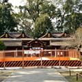 写真: 2018_1202_1247160 平野神社