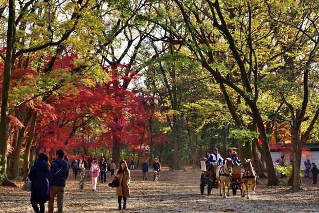 Photos: 2018_1202_145748 糺の森