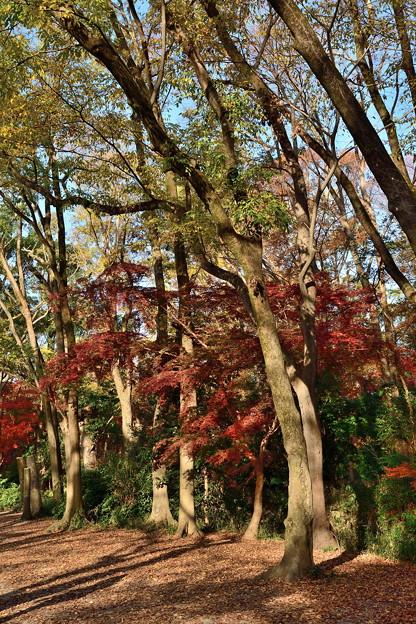 2018_1202_145506 糺の森
