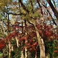 写真: 2018_1202_145506 糺の森