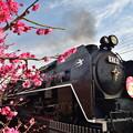 Photos: 2019_0224_142352 梅小路公園