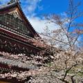 Photos: 2019_0331_143053 南禅寺法堂