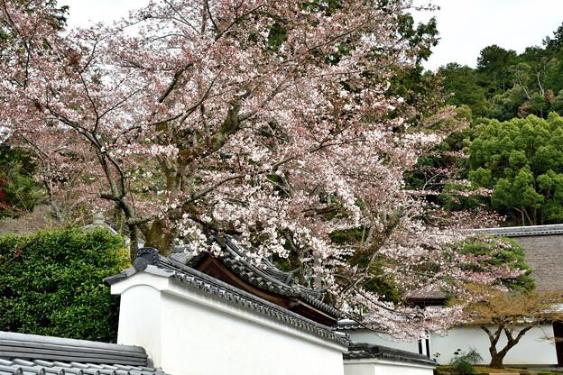 Photos: 2019_0331_145327_01 南禅寺