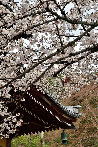 Photos: 2019_0331_144354_01 南禅寺