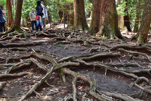 2019_0502_121128 木の根道