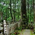 Photos: 2019_0616_094919 石田三成墓所