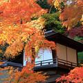Photos: オレンジに囲まれる聴秋閣 横浜・三溪園