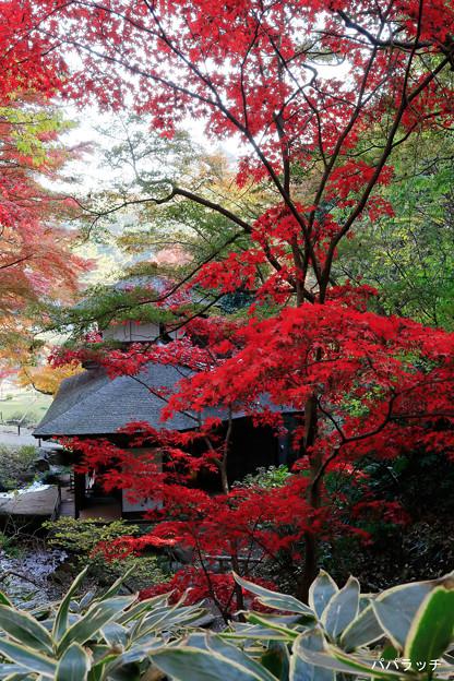 燃え上がる木の下、聴秋閣 横浜・三溪園