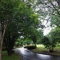 写真: 雨あがり