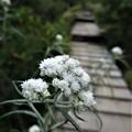 Photos: 木道歩き