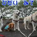 Photos: 4わんこ