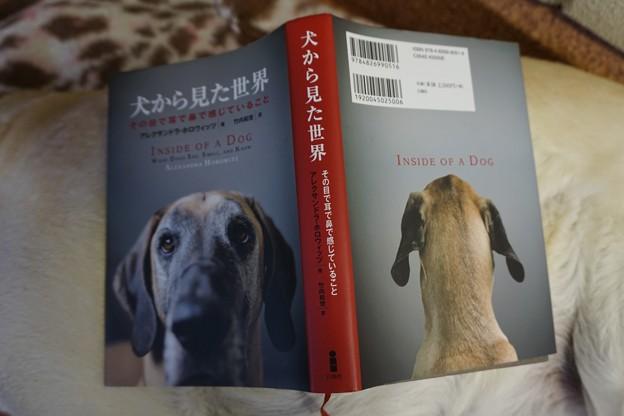 雨降り日は犬の本