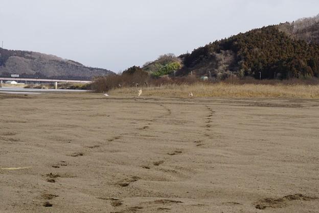 雪無し川原