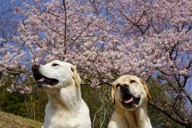 開花宣言の日