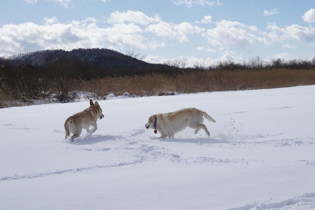 雪の川原で