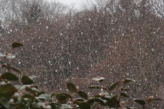 雪が降ってきた
