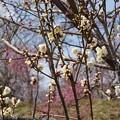 写真: 花のお山へ
