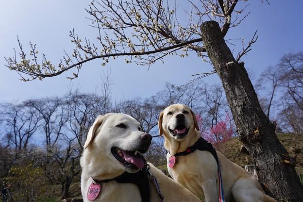 Photos: 花のお山へ