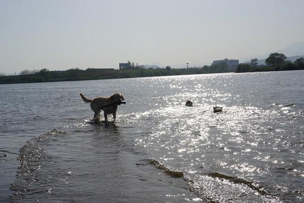 みんなの河原