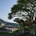 写真: 朝散歩