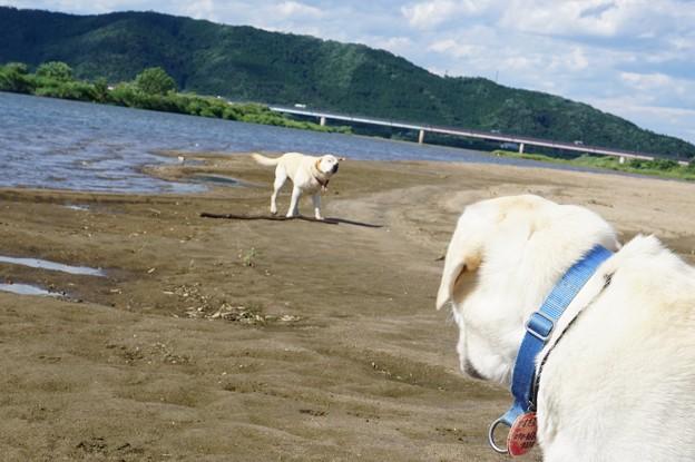夏日の河原