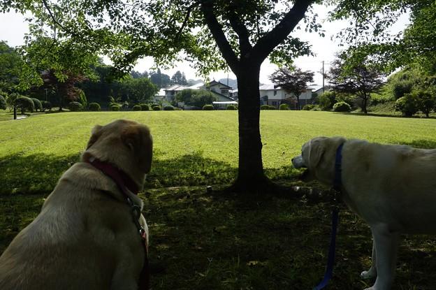 アジサイのある公園
