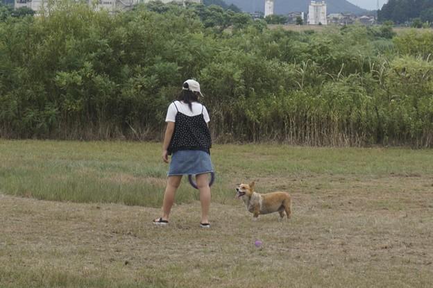 Photos: わんこ原っぱ