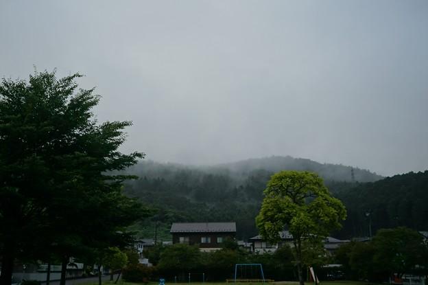 Photos: 雨散歩