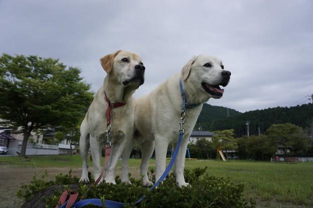 Photos: 近場の散歩