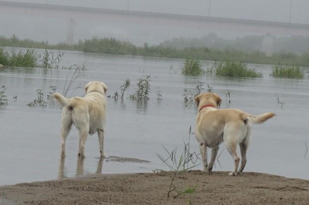 Photos: 川は増水