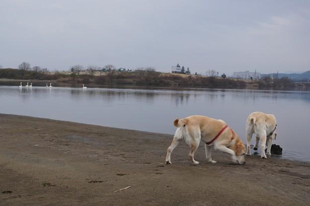 曇りの川原
