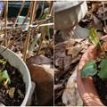 Photos: 種から芽が出た