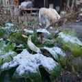 Photos: 3月の雪